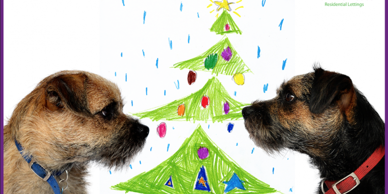 Smudge and Ted's Christmas tree competition