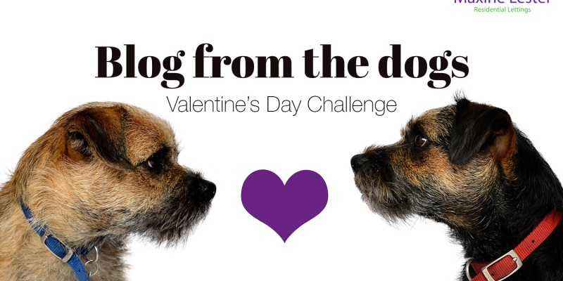 Blog from the dogs: it must be love!