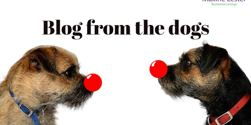 Blog from the dogs: Red Nose Day
