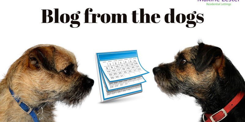 Blog from the dogs: May half term