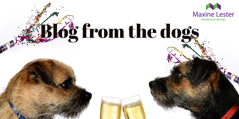 Blog from the Dogs – The Royal Wedding