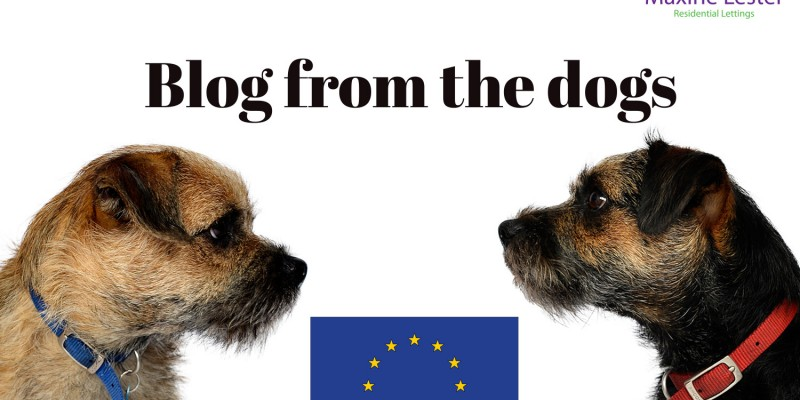 Blog from the Dogs: Post Brexit Housing Market