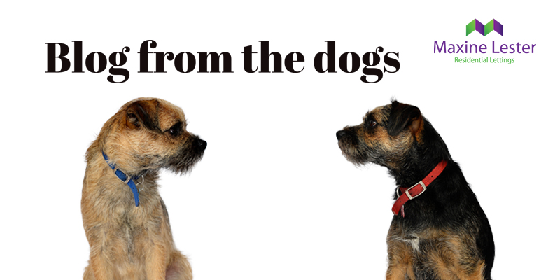 Blog from the Dogs: A successful landlord-tenant relationship