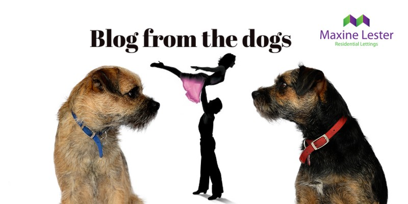 Blog from the Dogs: Upcoming events in the local area