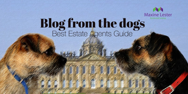Blog from the Dogs – Best Estate Agents Guide