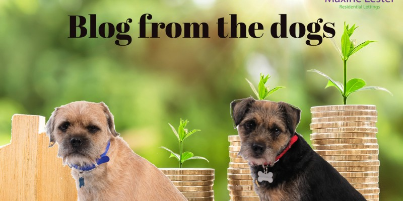 Blog from the Dogs – Stamp Duty News