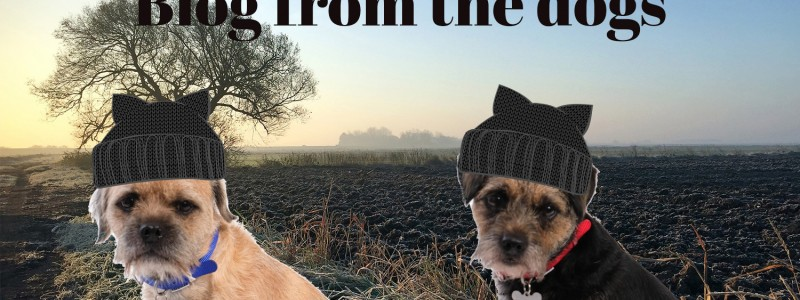 Blog from the Dogs – Coming Into Winter