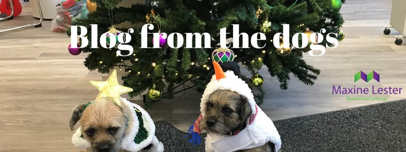 Blog from the Dogs – Christmas is Coming!