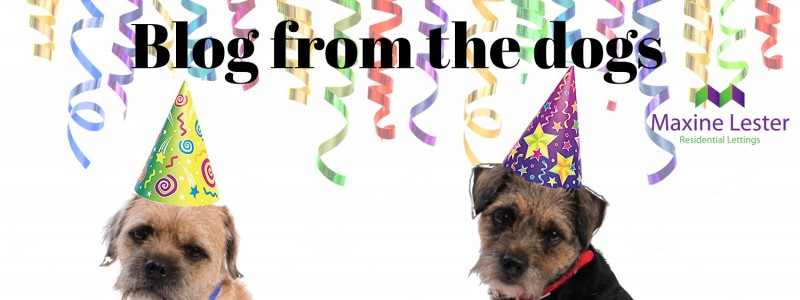Blog from the Dogs – Happy New Year!