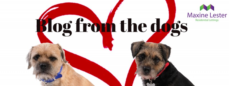 Blog from the Dogs – Valentine's Day
