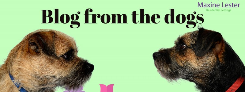 Blog from the Dogs – Easter Competition
