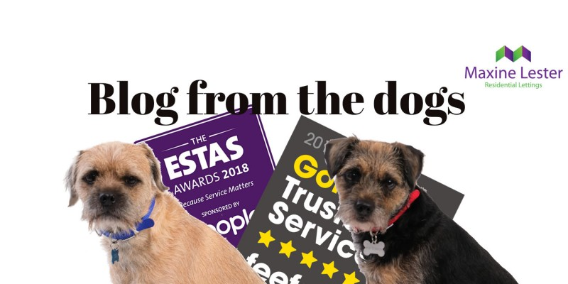 Blog from the Dogs – Feefo Gold Award and Shortlisted for the ESTAS
