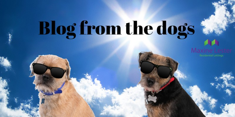 Blog from the Dogs – Bank Holiday Weekend
