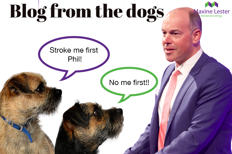 Blog from the Dogs: The ESTAS