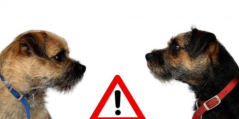 Blog from the dogs: Scam alert!