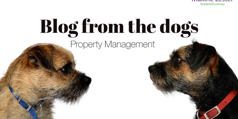 Blog from the dogs: Property management