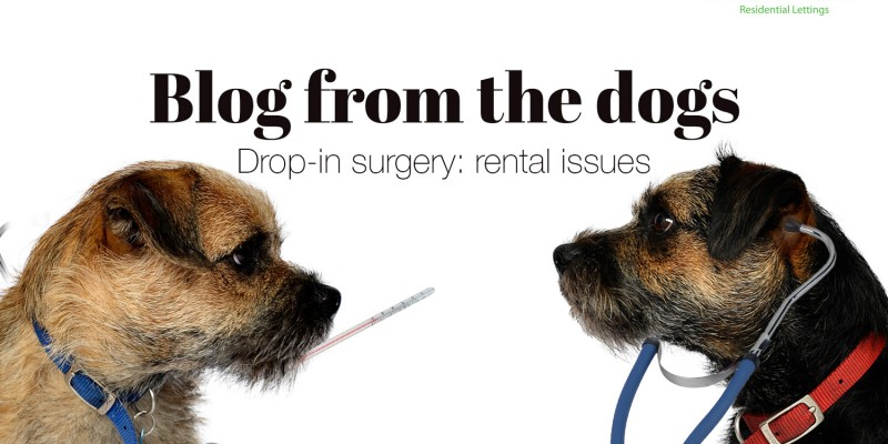 Blog from the dogs: rental issues