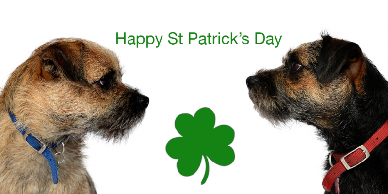 Blog from the dogs: St Patrick's Day