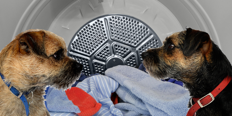 Blog from the dogs: tumble dryer fire risk