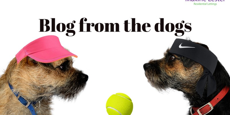 Blog from the Dogs – Wimbledon