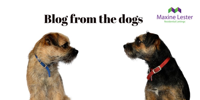 Blog from the Dogs – Location Location Location