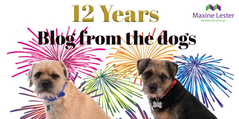 Blog from the Dogs – 12 Years in Business