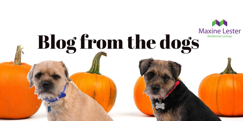 Blog from the Dogs – Getting Scarily Close to the Agents Giving Ball