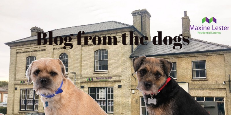 Blog from the Dogs – New Office