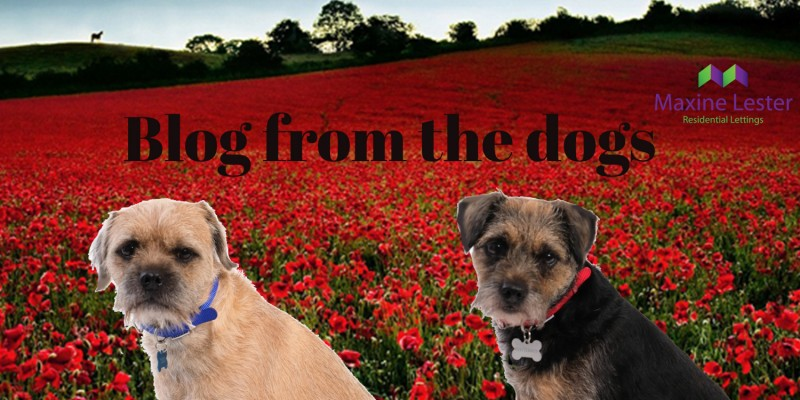Blog from the Dogs – This Years Charity