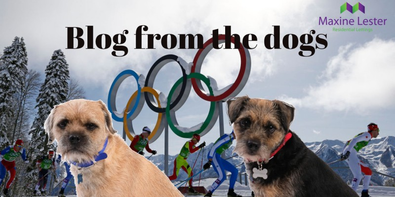 Blog from the Dogs – Winter Olympics Competition