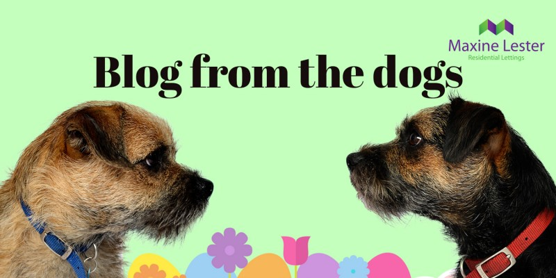 Blog from the dogs – Bank Holiday Weekend!