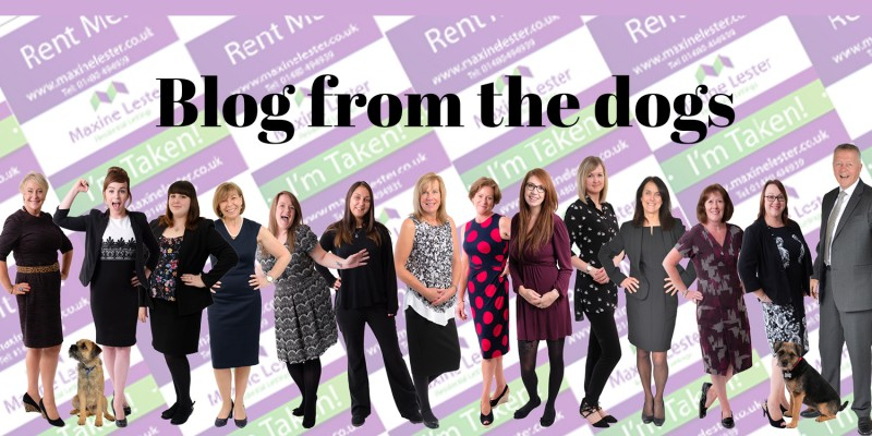 Blog from the Dogs – New Team Members