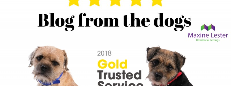 Blog from the dogs – Feefo Independent Reviews