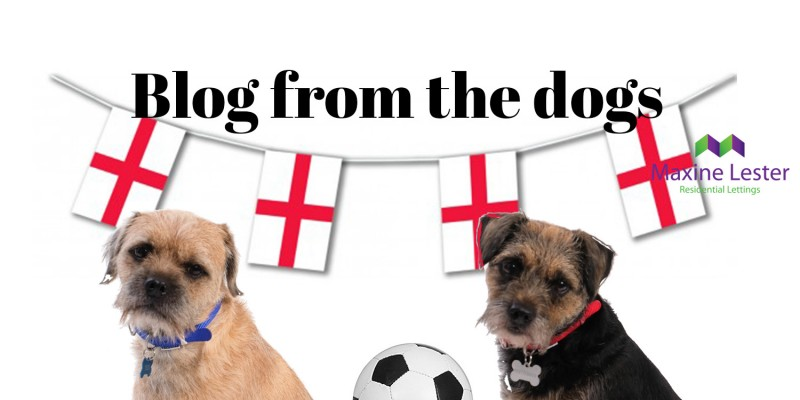 Blog from the Dogs – The World Cup