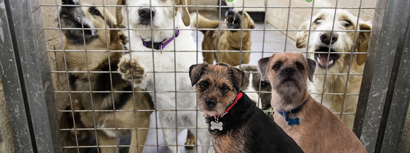 Blog from the Dogs: A Nation of Renters