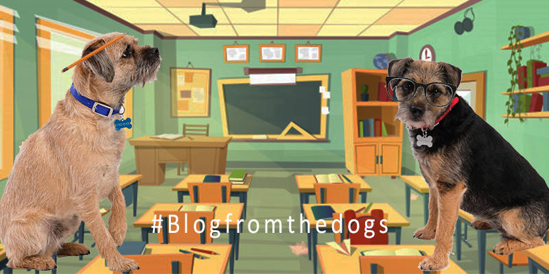 Blog from the Dogs: Back to School