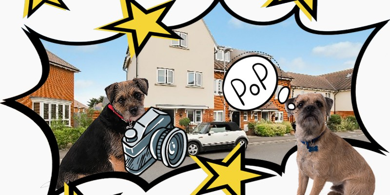 Blog from the Dogs:  How easy is it to market a property?