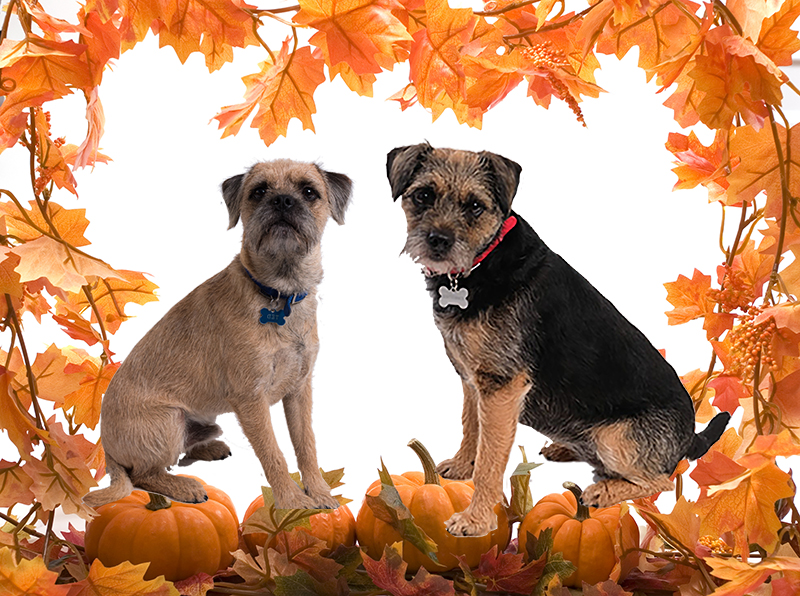 Blog from the Dogs: Pumpkin Pie