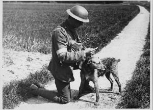 World War One Dog