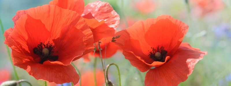 Our tribute to Remembrance Sunday