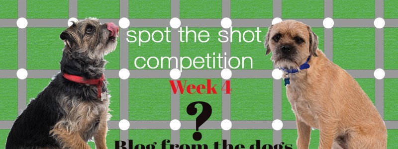 Blog From The Dogs: Spot the Shot Competition Week 4