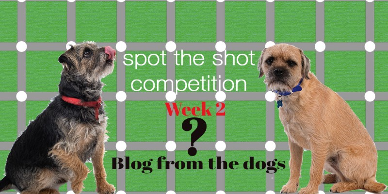 Blog From The Dogs: Spot the Shot Competition
