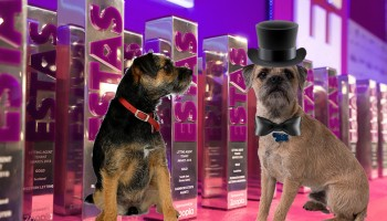 Blog from the dogs: Ted gets excited about the virtual ESTAS