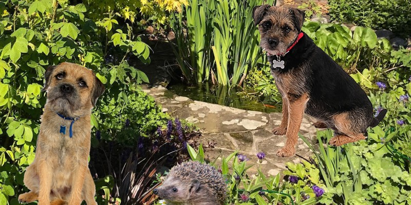 Blog from the Dogs: Help the Hedgehogs