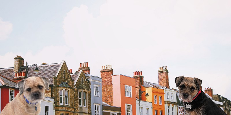 Blog from the Dogs: Finding a letting agent