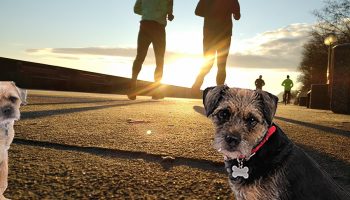 Blog from the dogs: The pups do parkrun