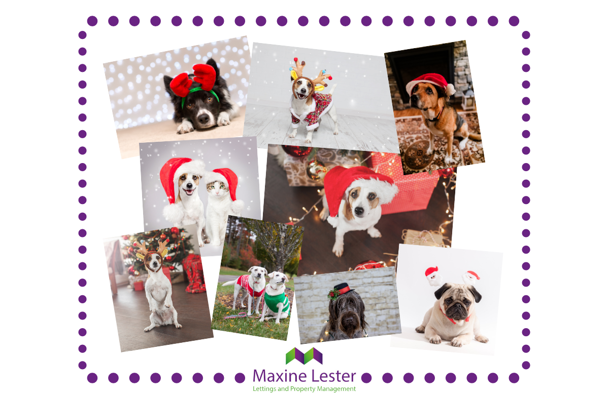 Maxine Lester Lettings Best Dressed Dog Competition